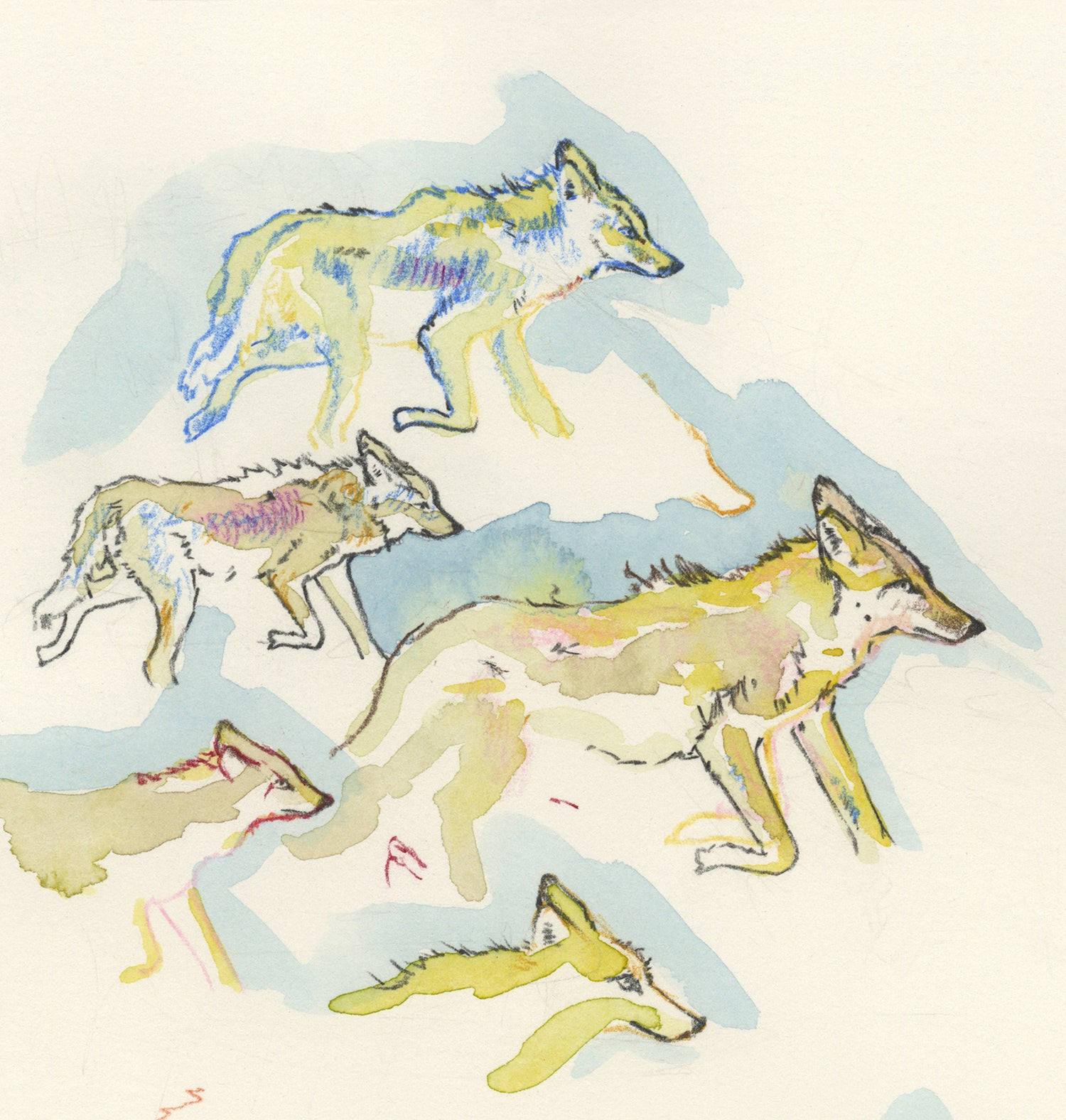 "Image of ""Coyote Approach"" giclee print"