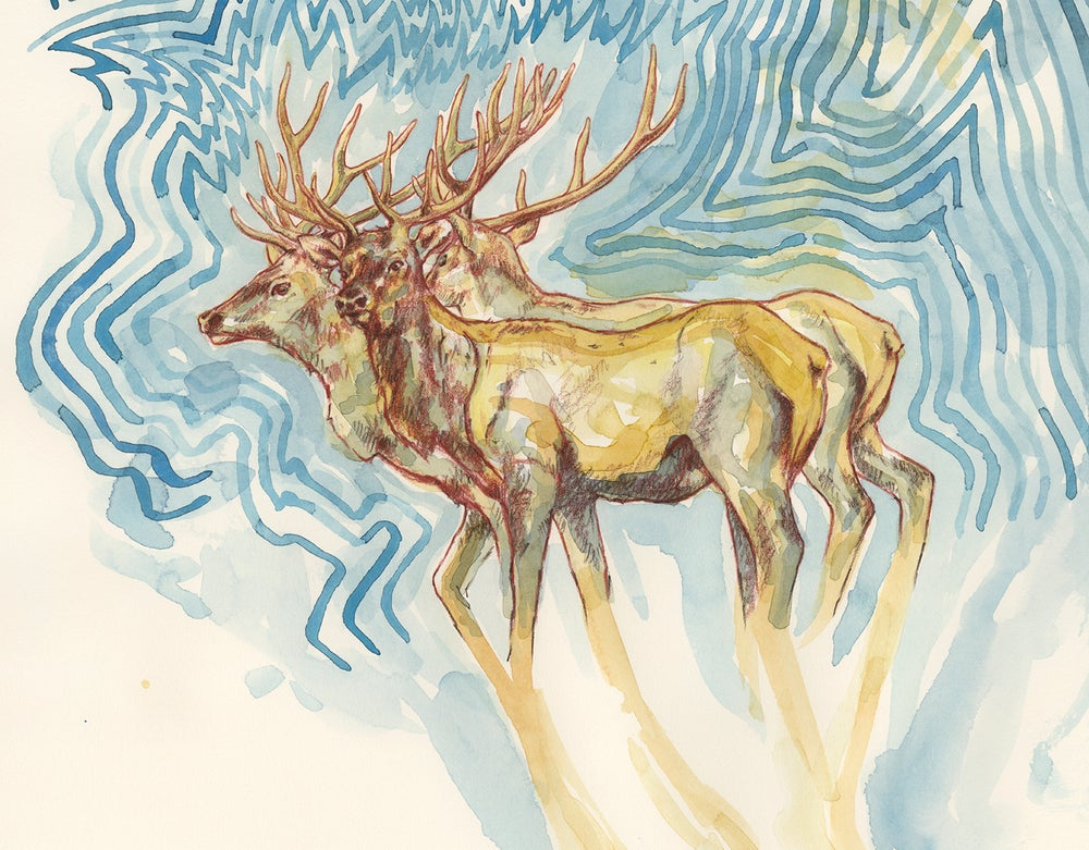 "Image of ""Wapiti Mating Call"" giclee print"