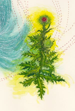 """Meetings with Arthropods at a Thistle"" giclee print"