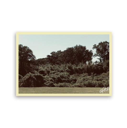 Image of Repeat : Kudzu