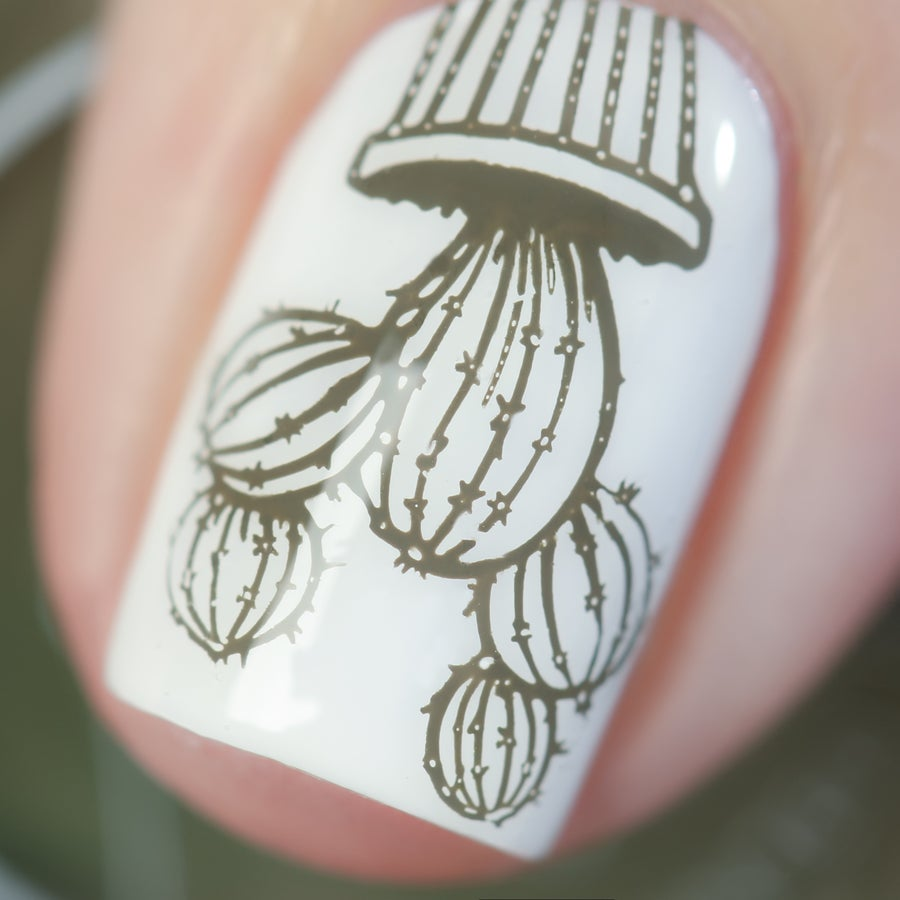 Image of Stamped in Cacti