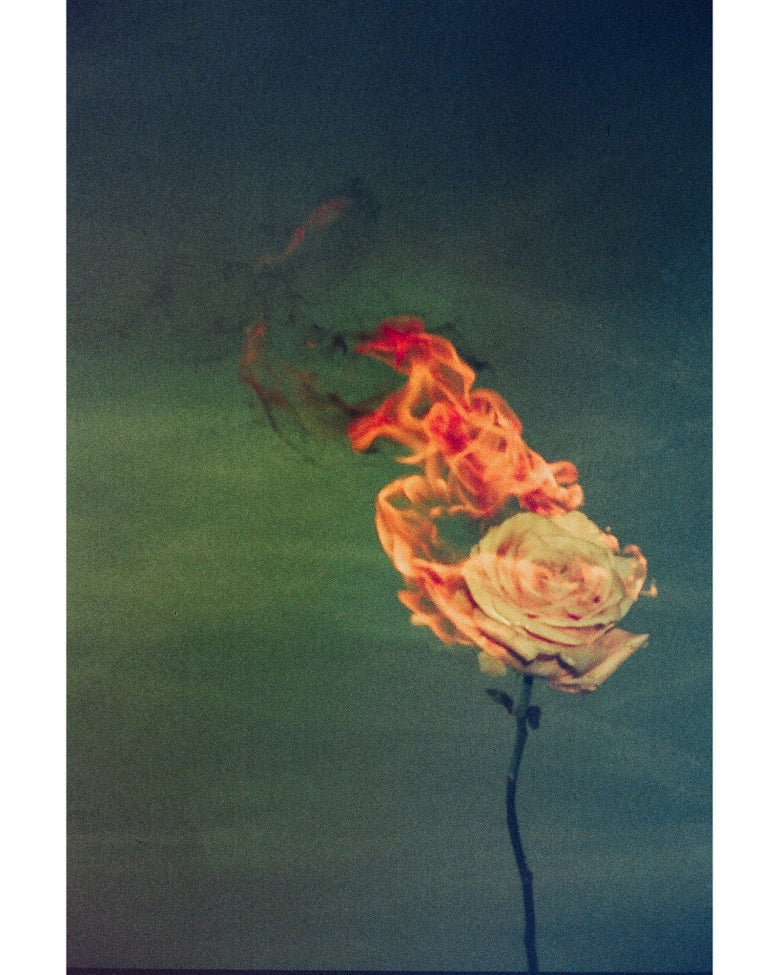 Image of Kate Bellm - 'Burning Rose'. Original artwork 2019