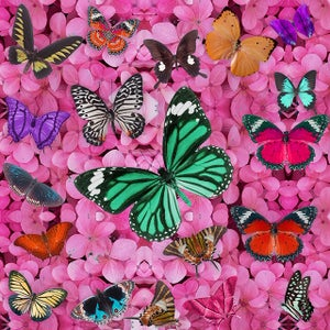 Image of BUTTERFLY HEAVEN EMBELLISHED