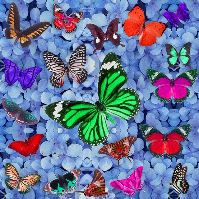 Image of BUTTERFLY HEAVEN BLUE EMBELLISHED