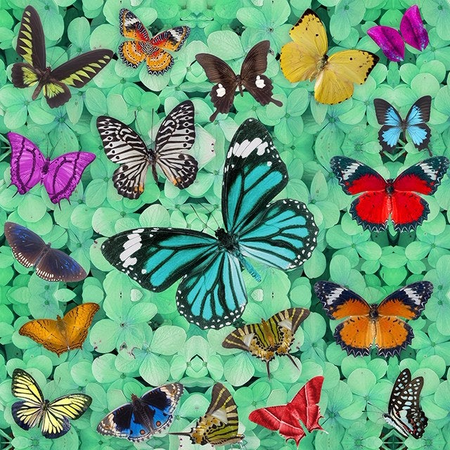 Image of BUTTERFLY HEAVEN GREEN EMBELLISHED