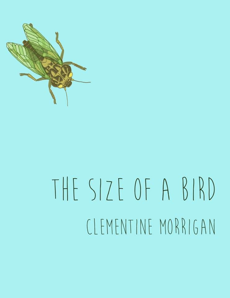 The Size of a Bird (Book)