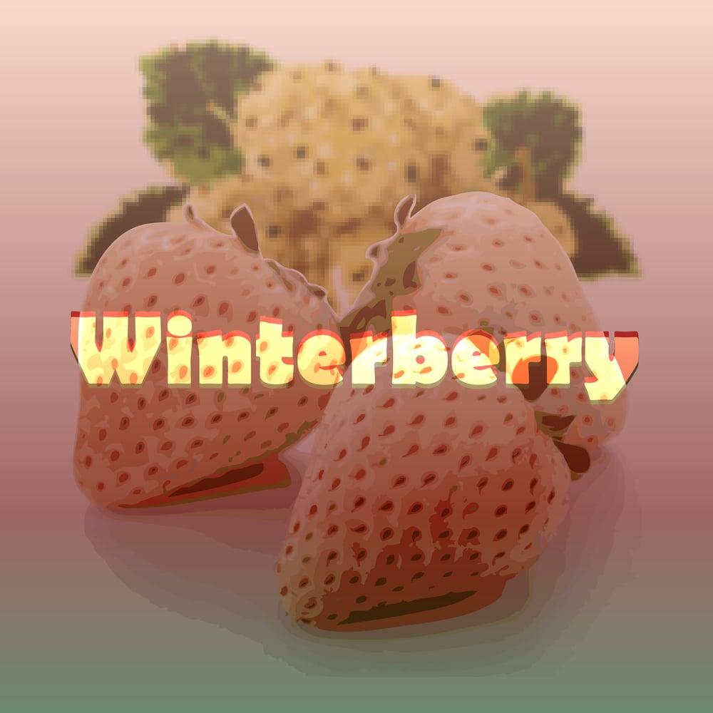 Image of Winterberry