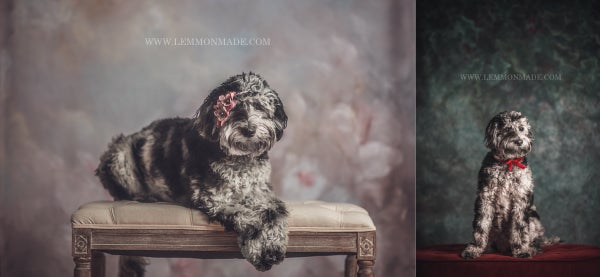 Image of Fine Art Holiday Pet Portrait Sessions with Lemmonmade Photography {Pontiac, MI}