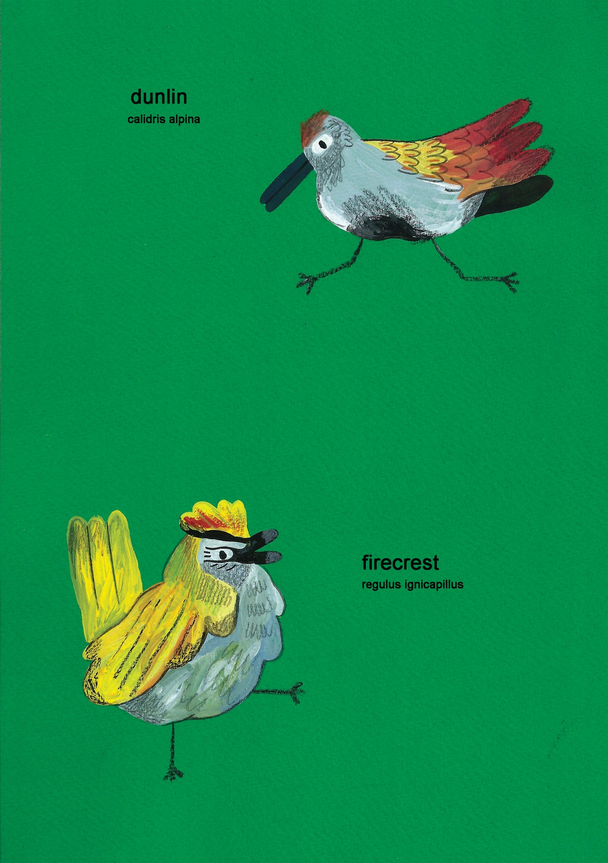 Image of A Book of Birds