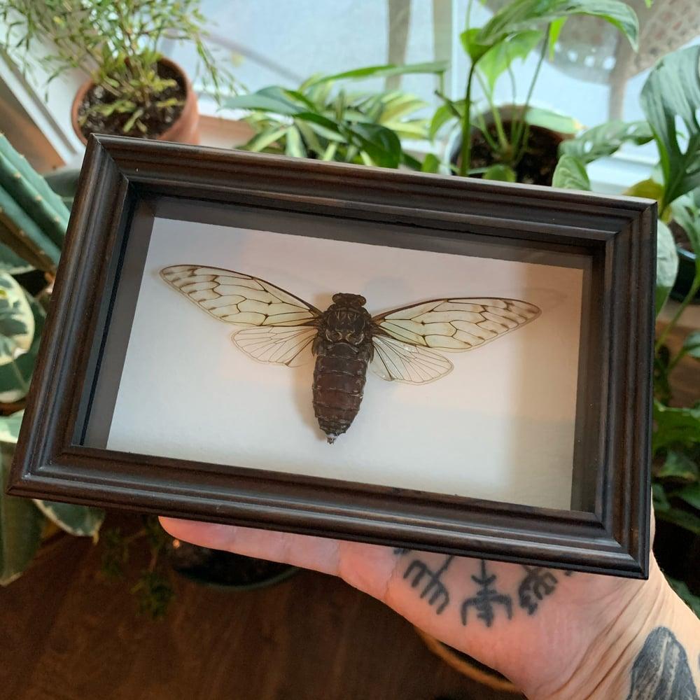 Image of lil cicadas
