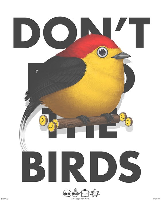 Image of Wire-tailed Manakin (PSA)