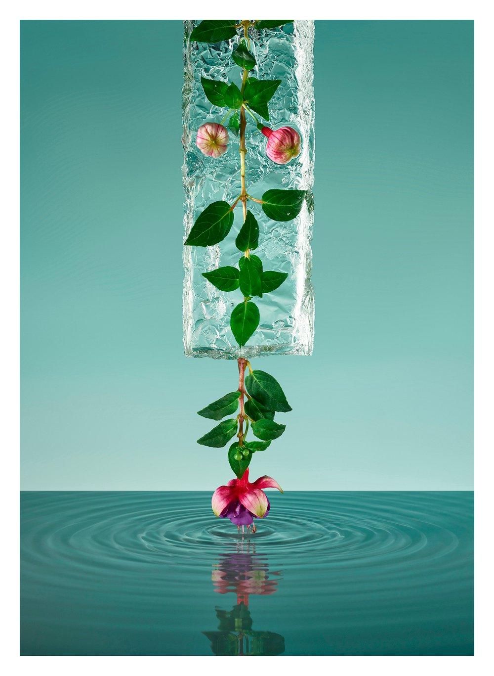 Image of Freezing Flowers 04