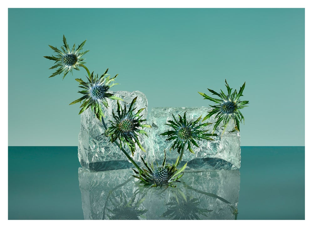 Image of Freezing Flowers 01