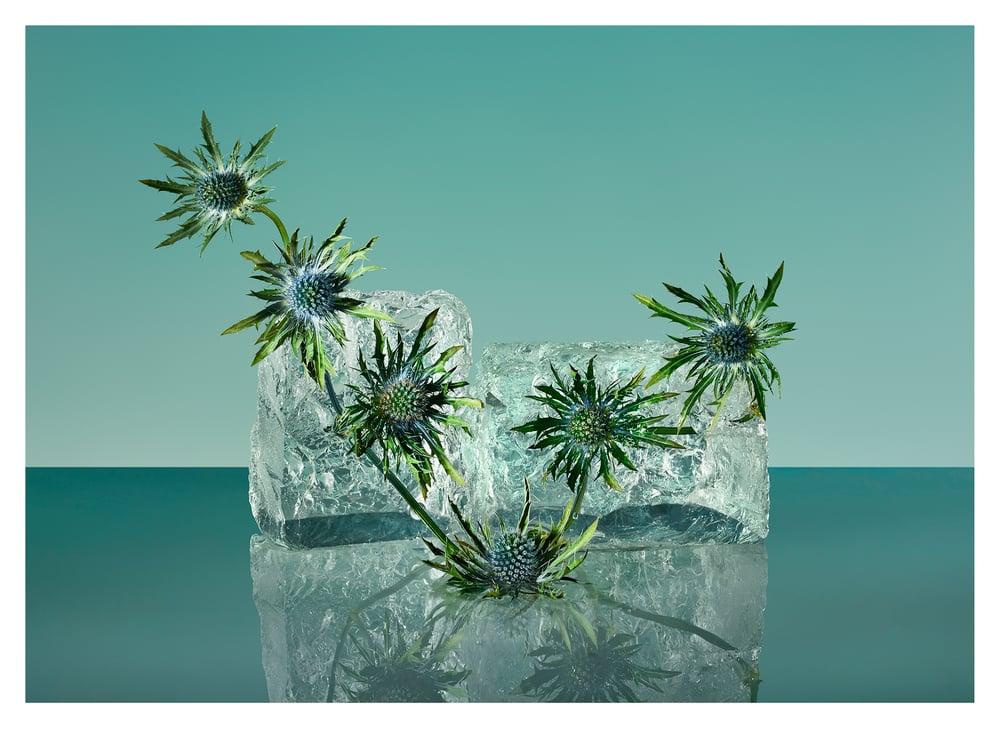 Image of Freezing Flowers 01