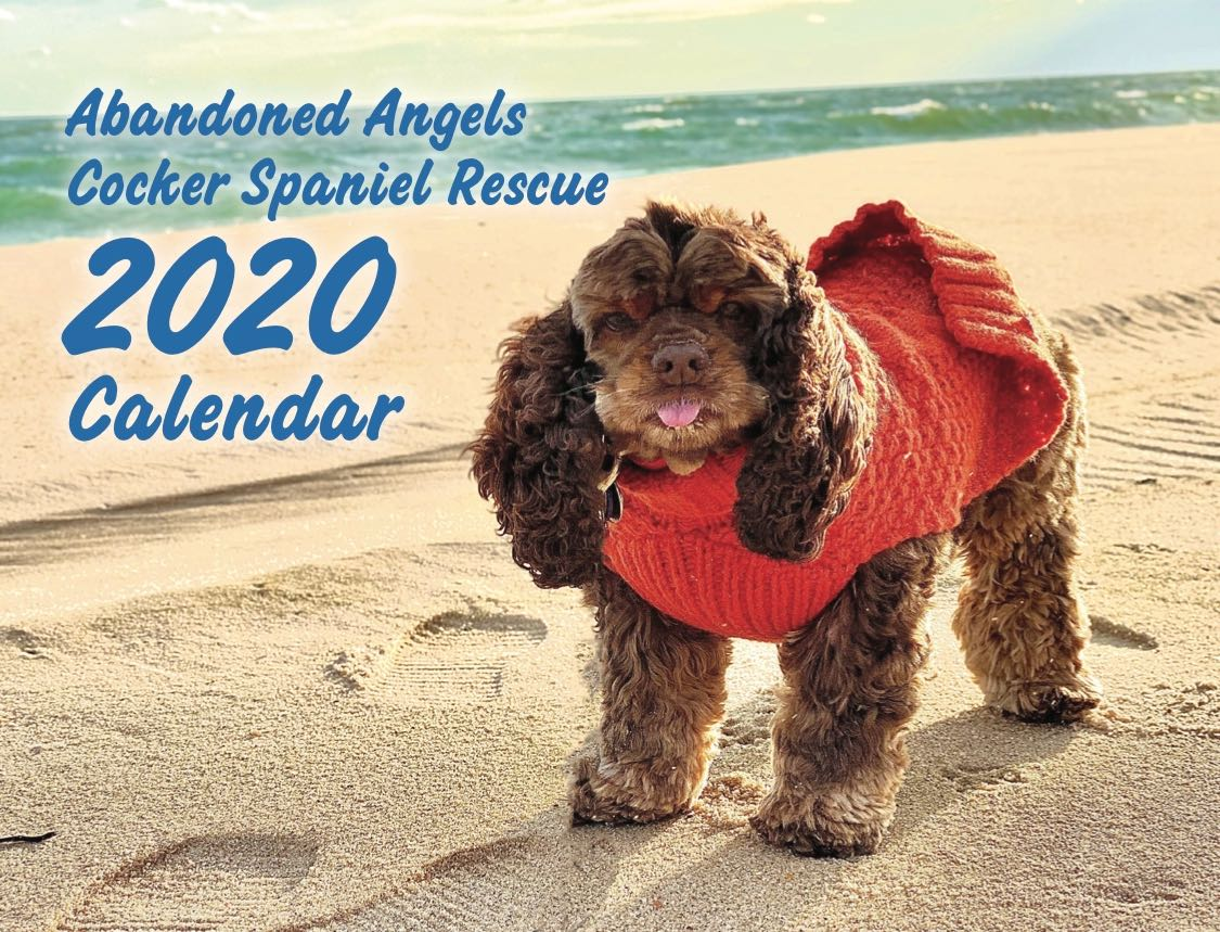 Image of 2020 Abandoned Angels Rescue Calendar - PRE SALE!