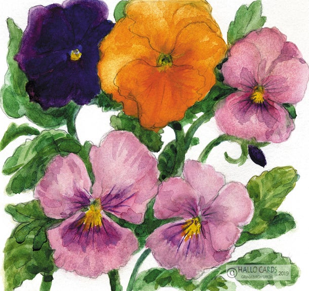 Image of Pansies