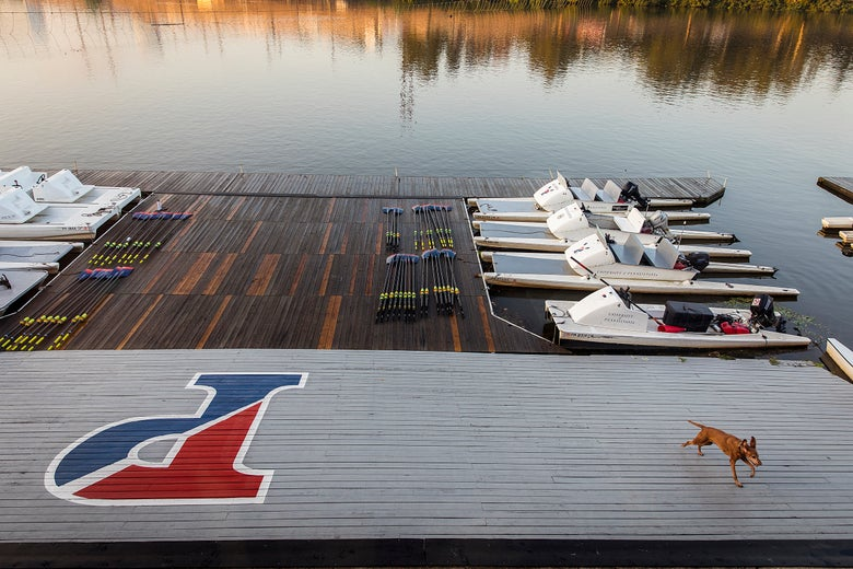 Image of Art Print - Penn Rowing 06