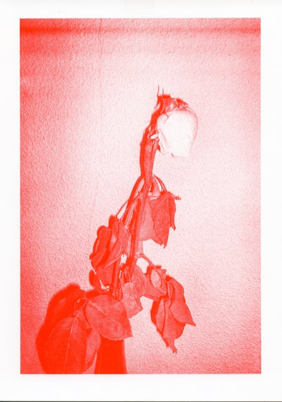 Image of RED ROSES Riso Print on Fine Art paper