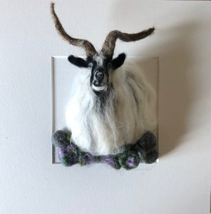 Image of 'Jerry' the Welsh Mountain goat