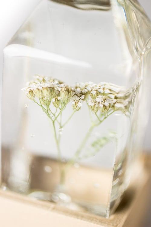 Image of White Yarrow (Achillea millefolium) - Floral Prism Desk Lamp