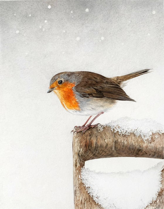 Image of 'Winter Robin' Mounted Print