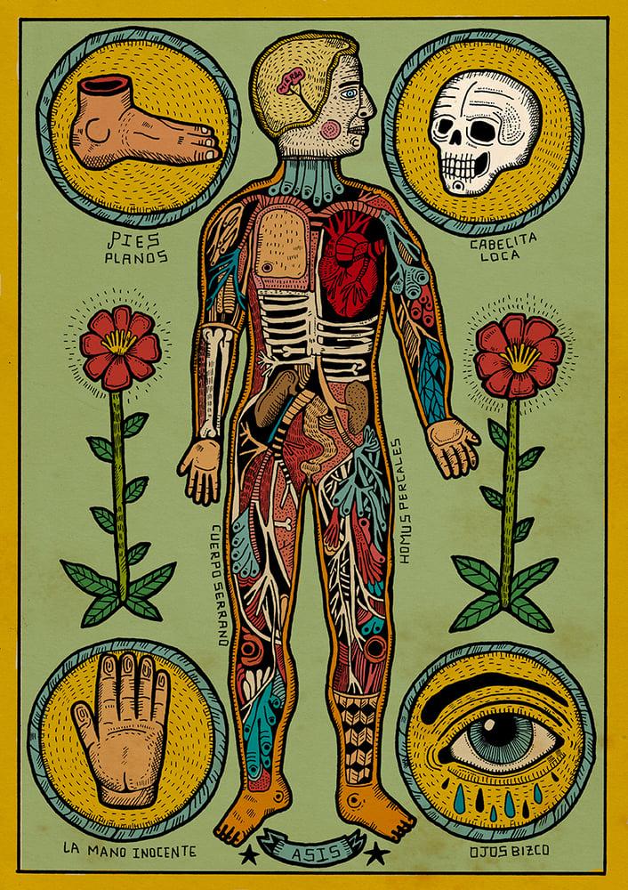 Image of Anatomia de un cuerpo sesi