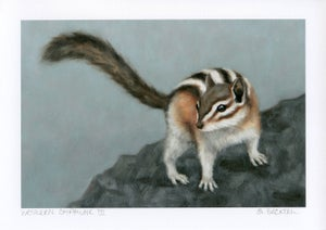 "Image of ""Western Chipmunk III"" Mini Art Print"