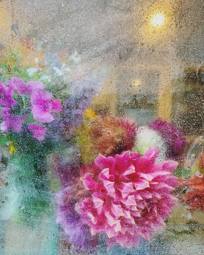 Image of 'Rainy Dahlia' - LIMITED EDITION, SIGNED PRINT