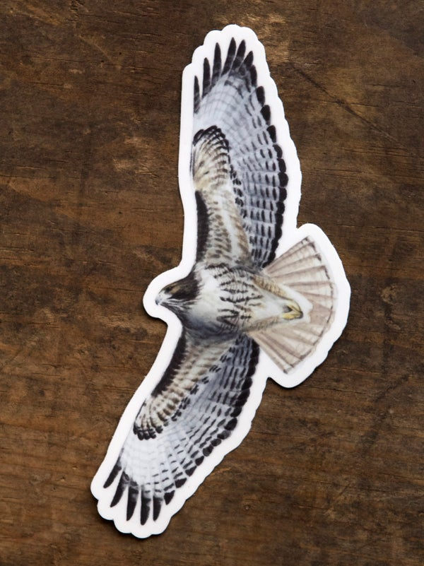 Image of Red-tailed Hawk Stickers - 2-pack