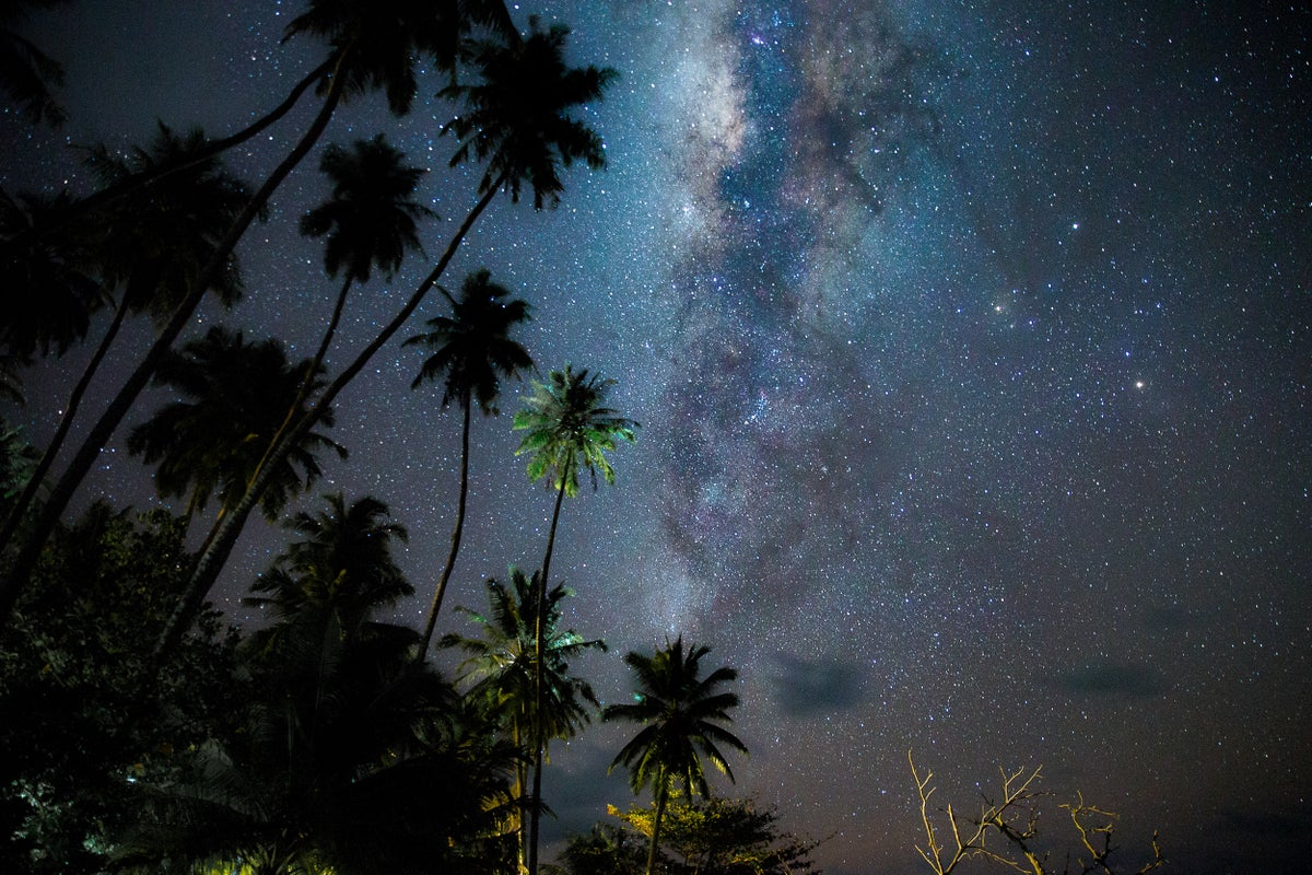 Image of Palms and Planets
