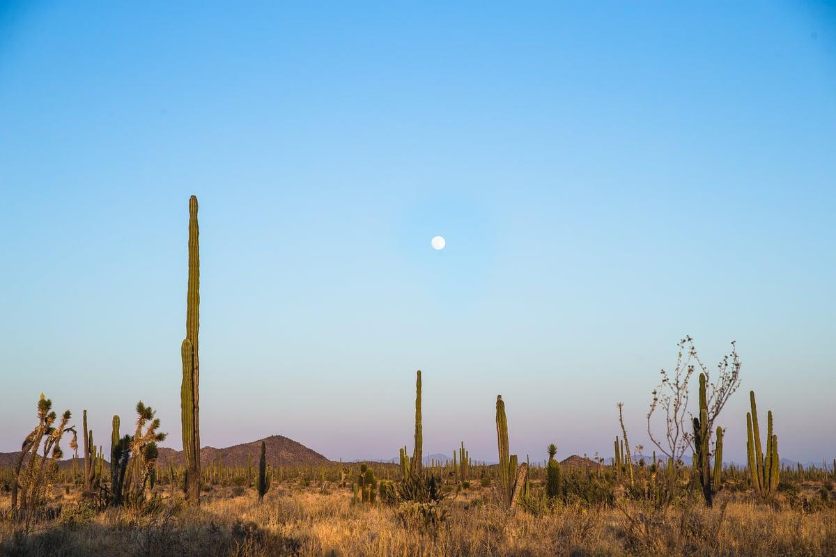 Image of Baja