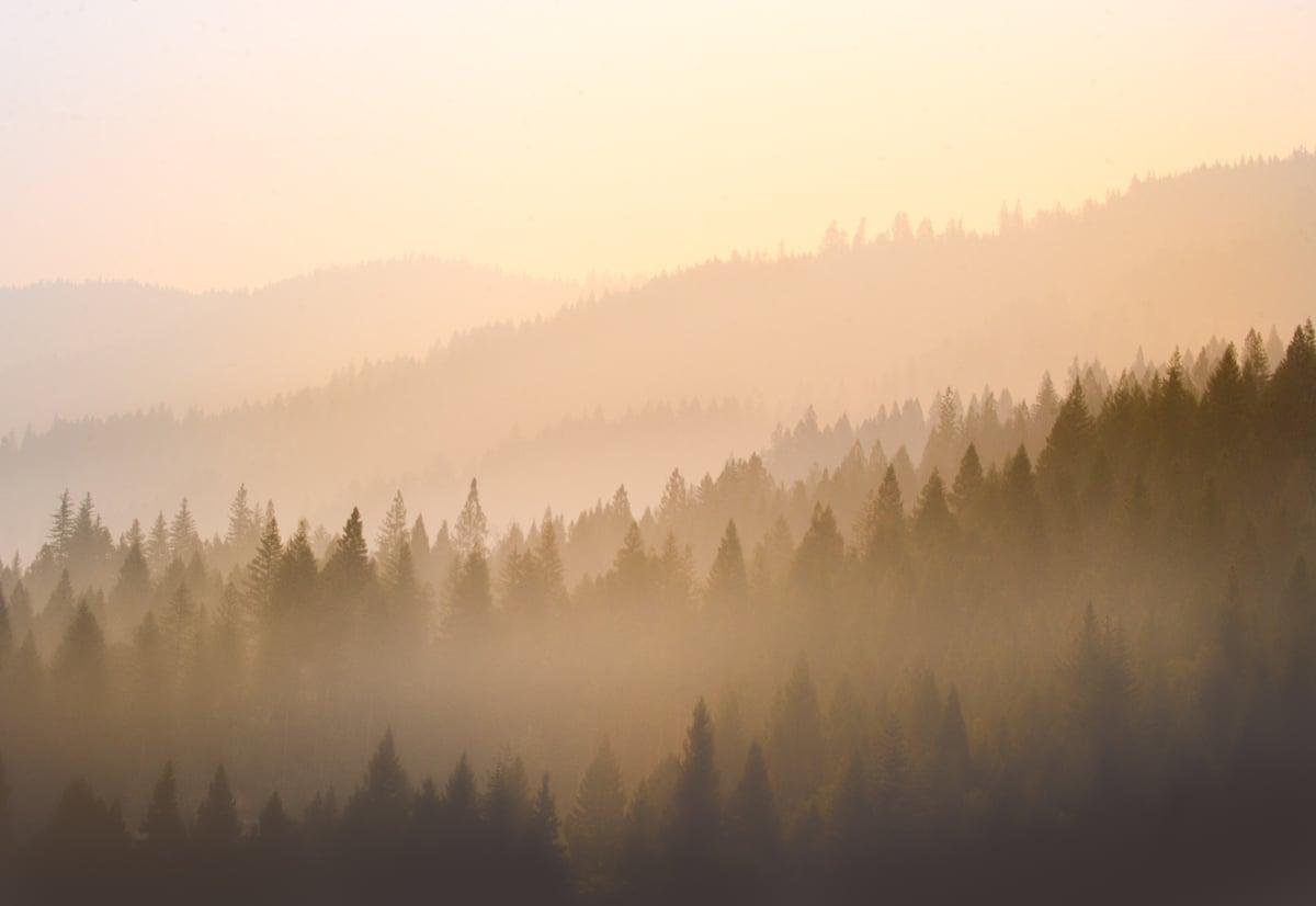 Image of Oregon Haze