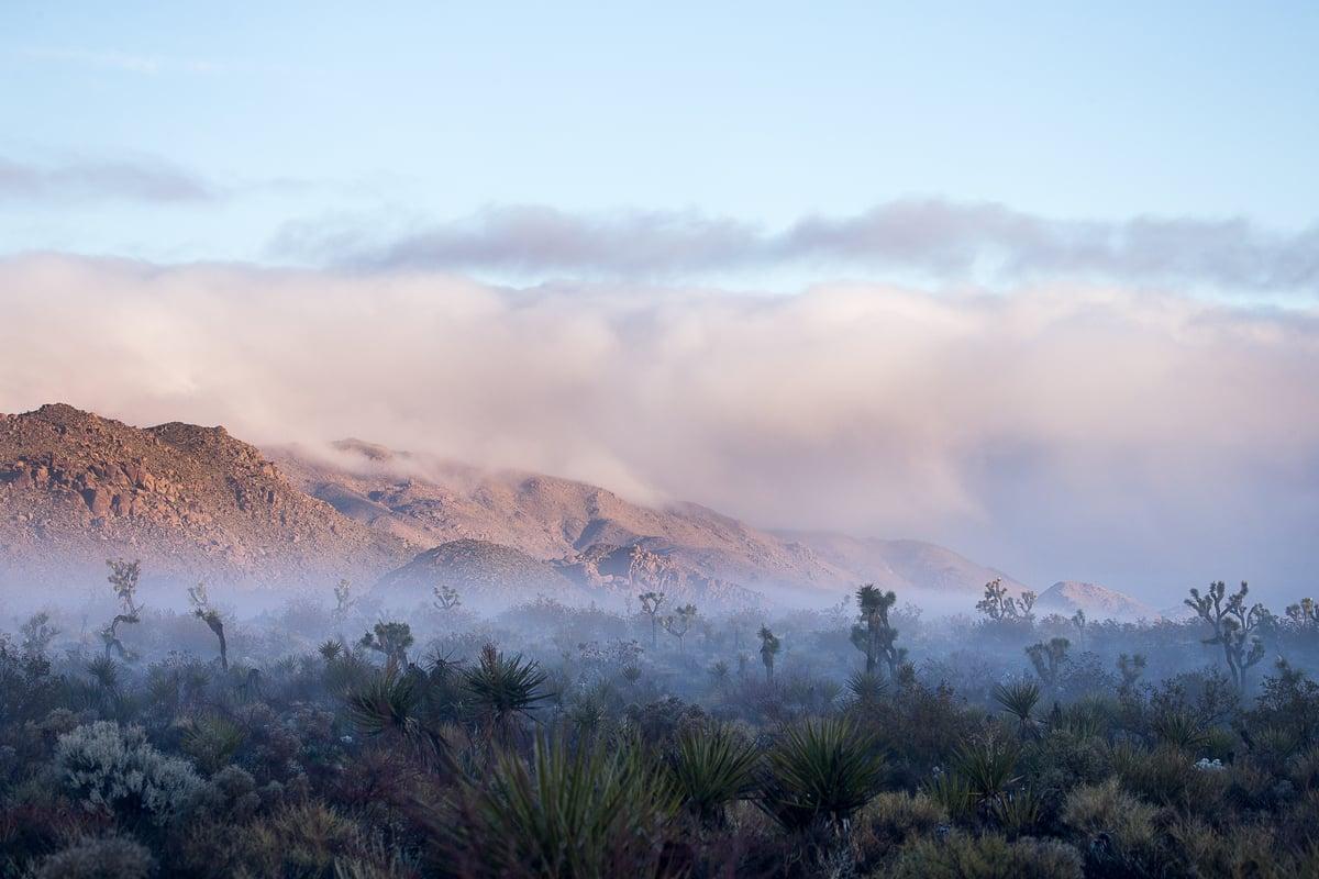 Image of High Desert