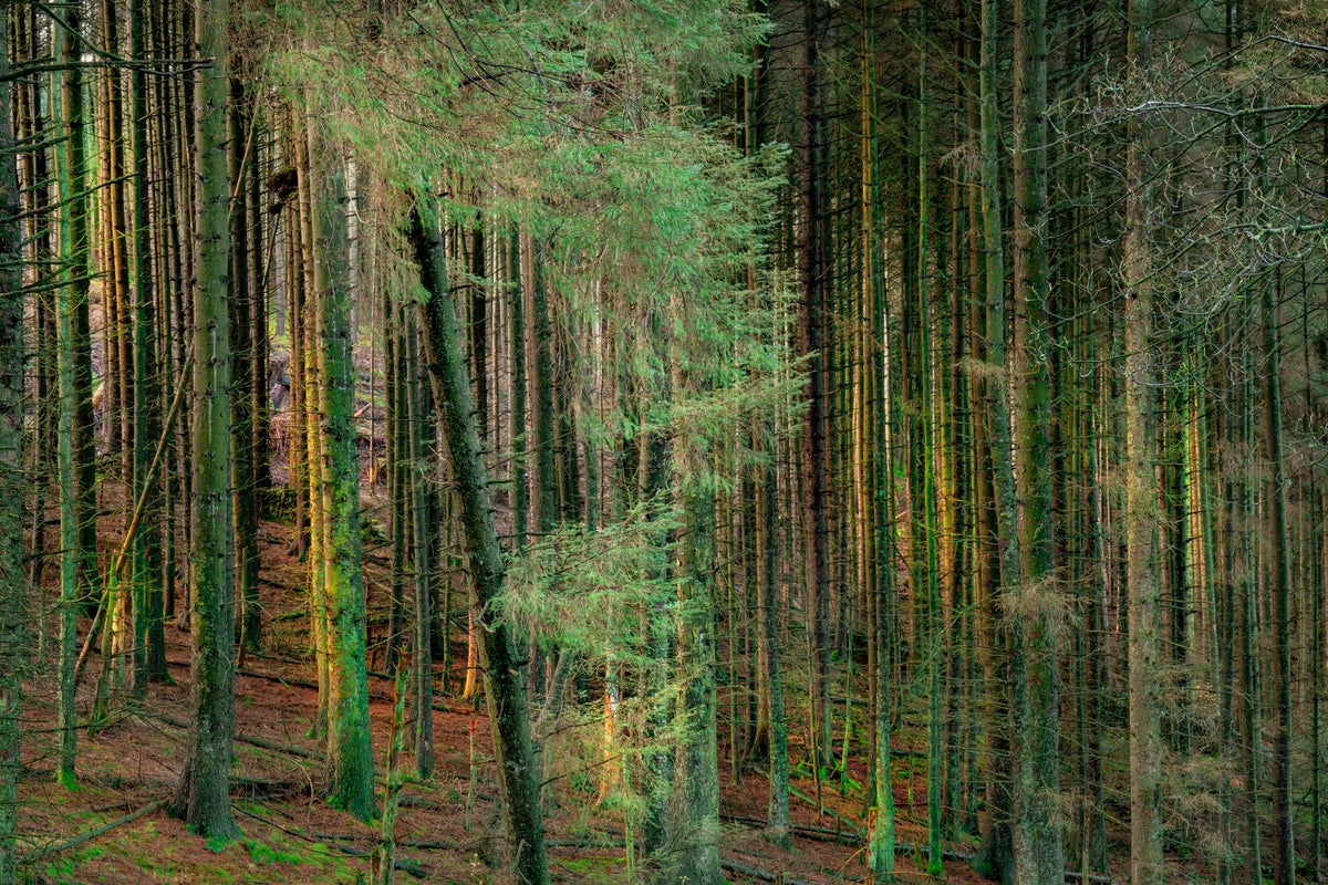 Image of MACCLESFIELD FOREST, DAWN 02