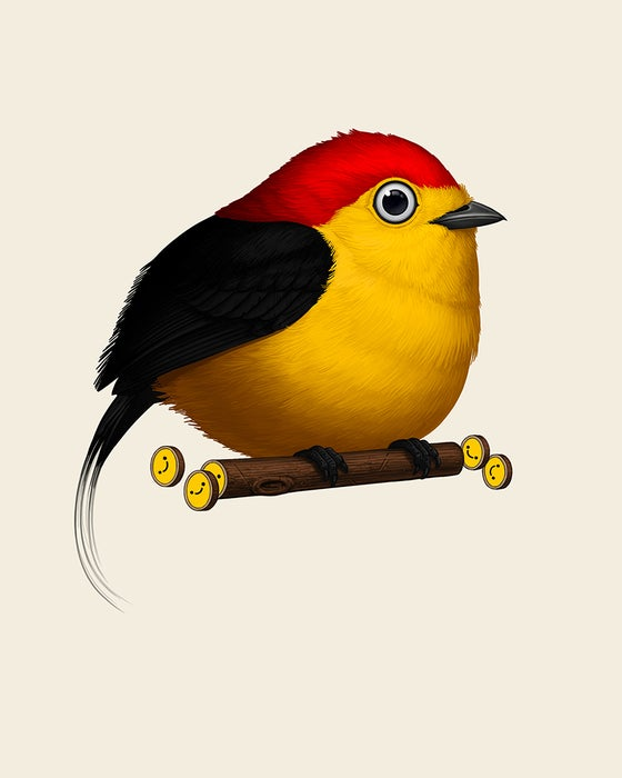 Image of Wire-tailed Manakin