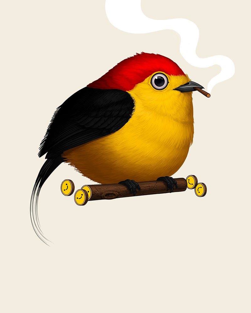 Image of Wire-tailed Manakin (blunt variant)