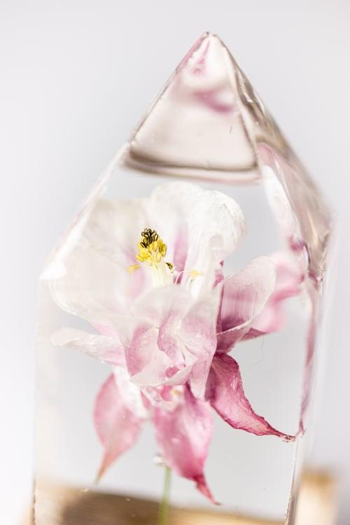 Image of Columbine (Aquilegia vulgaris) - Floral Prism Light #2