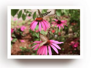 Image of Mariposas