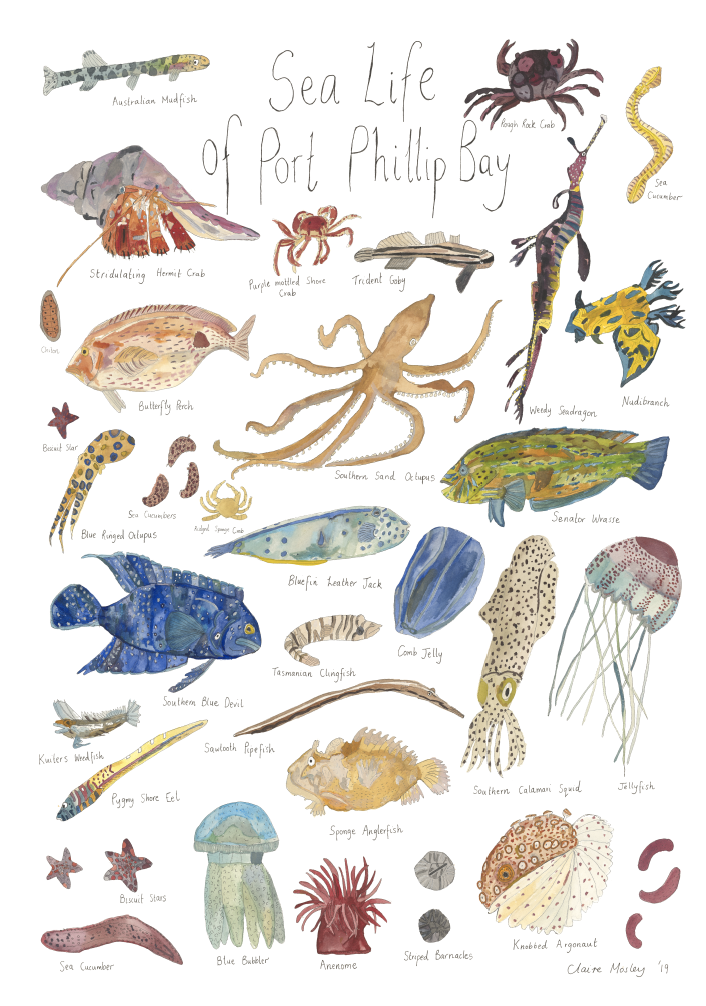 Image of Sea Life of Port Phillip Bay ~ Prints