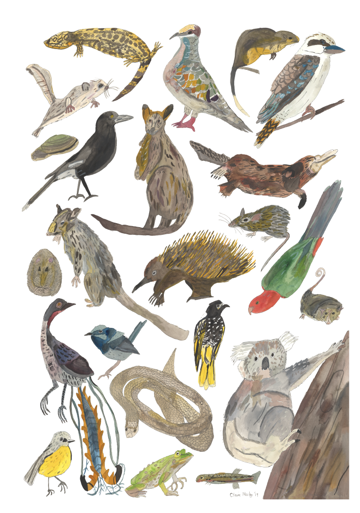 Image of Animals of East Vic ~ Prints