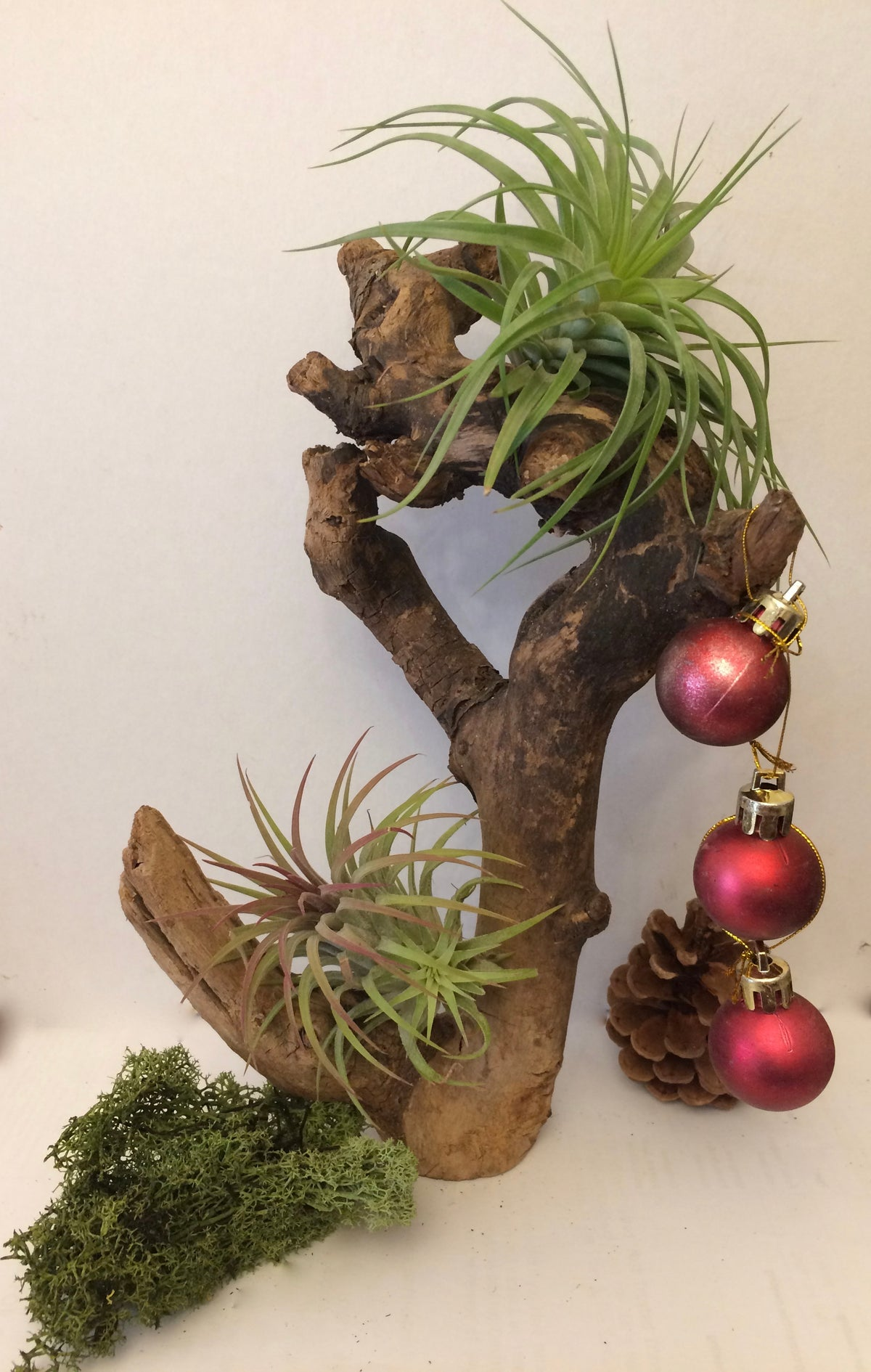 Image of Tillandsia with wood no.2