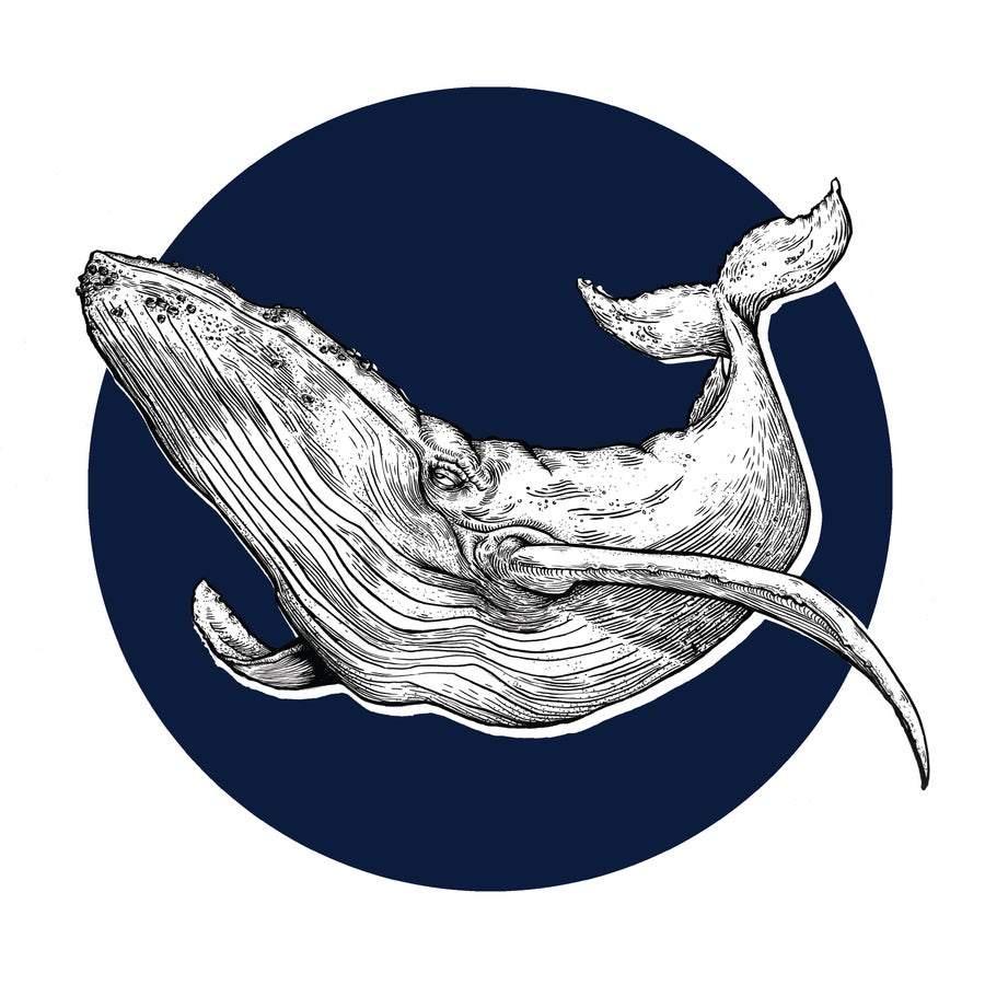 Image of Whaley Good