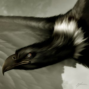 Image of The Lawndale Thunderbirds.