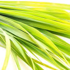 Image of Lemongrass