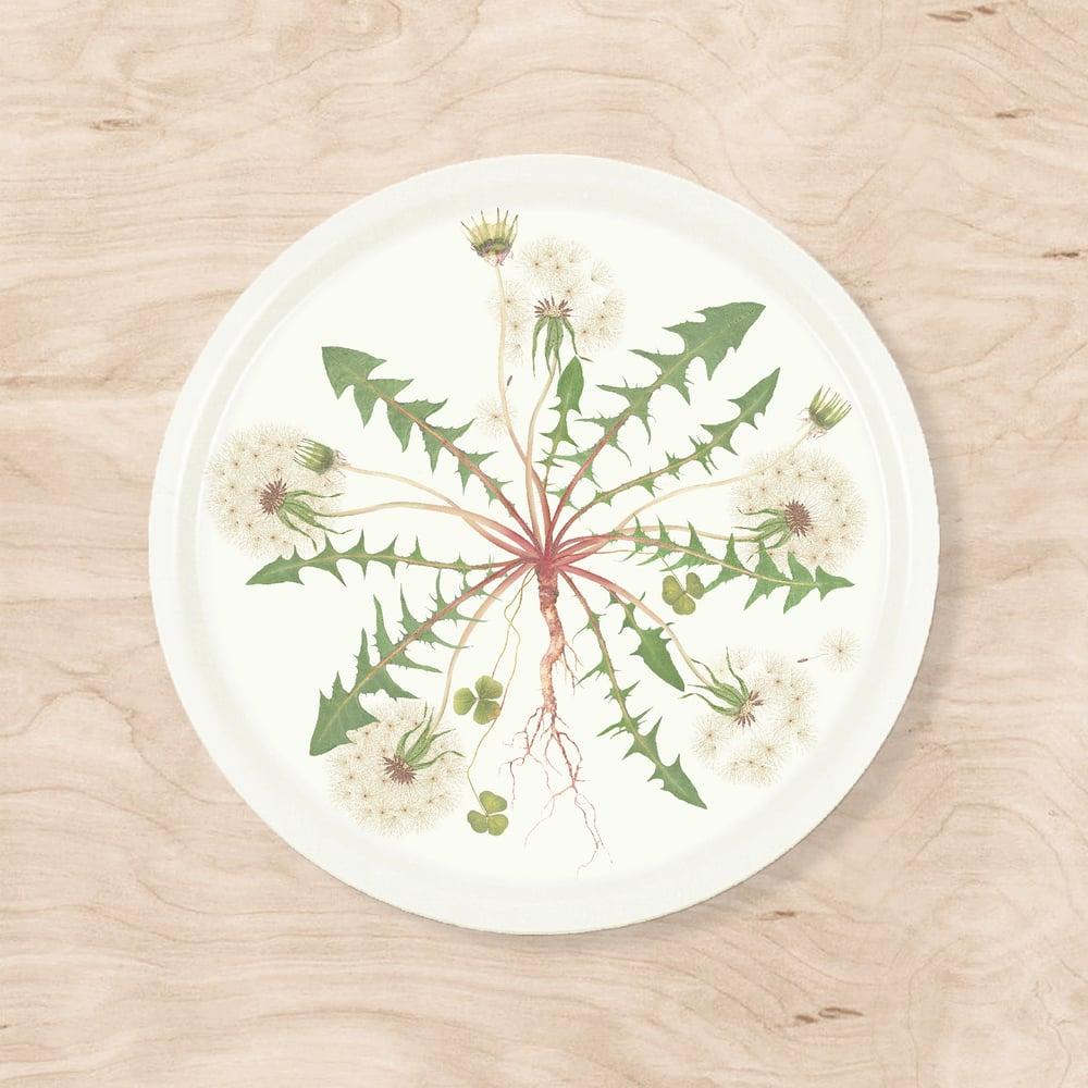 Image of Dandelion Tray
