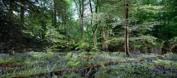 Image of Pollok Park 007