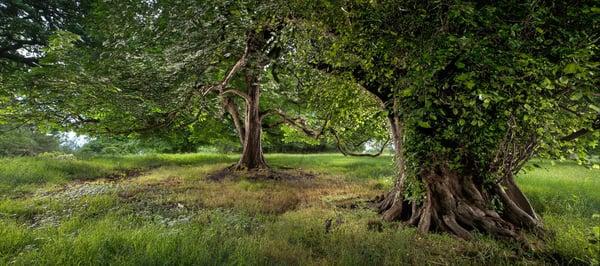 Image of Pollok Park 013