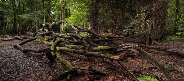 Image of Pollok Park 014
