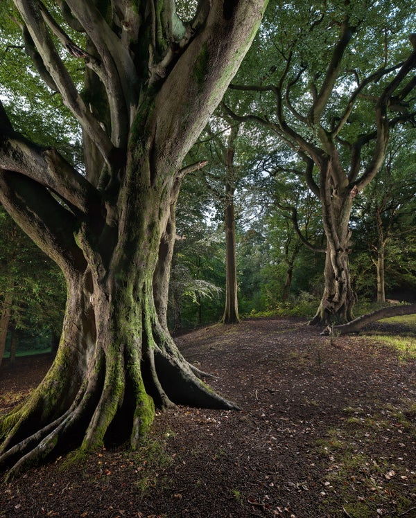 Image of Pollok Park 009