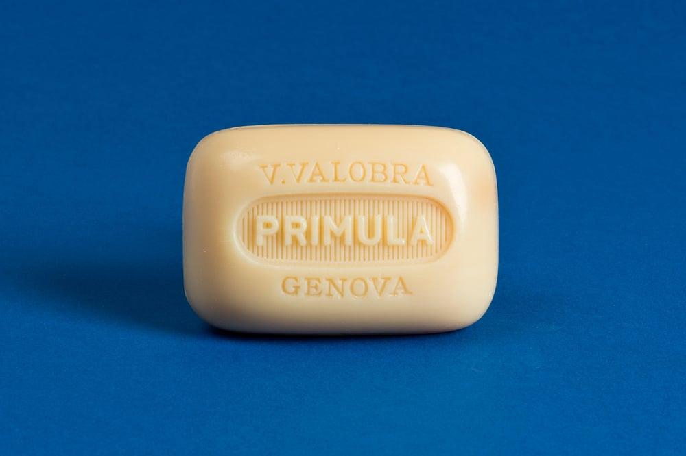 Image of primula